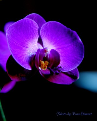 Top 12 most beautiful flowers in the world listovative orchids mightylinksfo