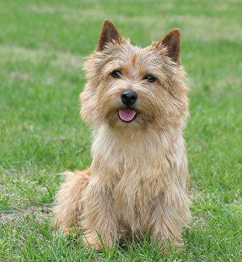 Top 12 Cutest Dog Breeds List Listovative