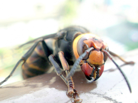 Top 10 Most Dangerous Insects List - Listovative