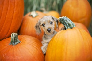 dog-first-pumpkin-patch-murphy-tx-church-chantal-brown-photo