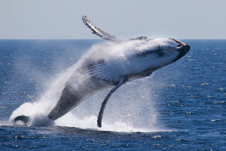 10 Interesting Facts about Whales - Listovative