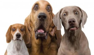 surprised-dogs