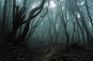 Aokigahara-Forest-1