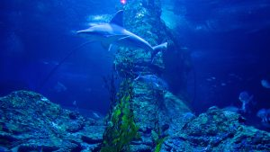 Aquarium-Of-Western-Australia-Aqwa