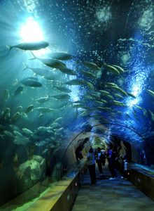 Top 15 Largest Aquariums in the World - Listovative