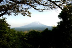 fuji_through_the_trees