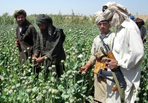 **FILE** A Taliban militant is seen with an AK- 47 rifle gun, right, as farmers collect resin from poppies in an opium poppy field in Naway district of Helmand province, southwest Afghanistan in a Friday, April 25, 2008 file photo. Drought and anti-drug campaigns helped slash Afghanistan's opium poppy cultivation by 19 percent this year compared to 2007, but the country is still far and away the world's leading source of the heroin-producing crop, the U.N. said Tuesday, Aug. 26, 2008. (AP Photo, File)